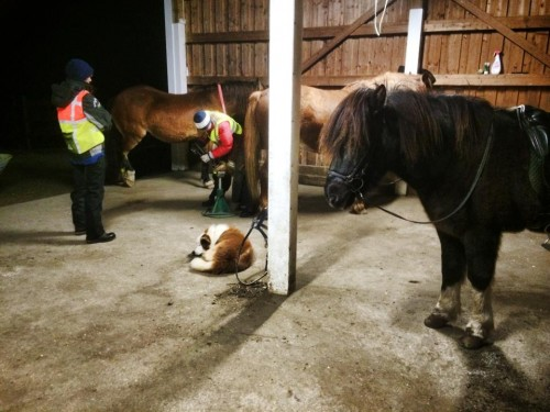 Skoing og trening av hest